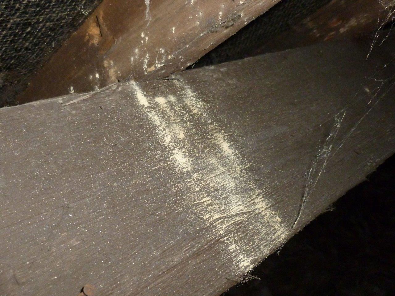 Woodworm Emergence Holes - Frass fallen onto Timber below.