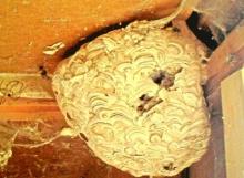 Wasp Control, Domestic Client, Bristol