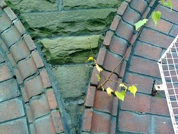 Plant Growth Highlighting Moisture Ingress Through Cracked Mortar