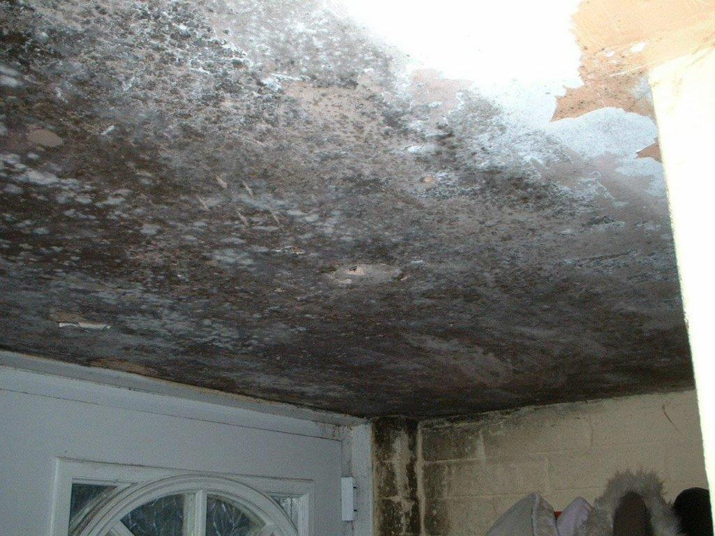Severe Mould Growth Due to Condensation