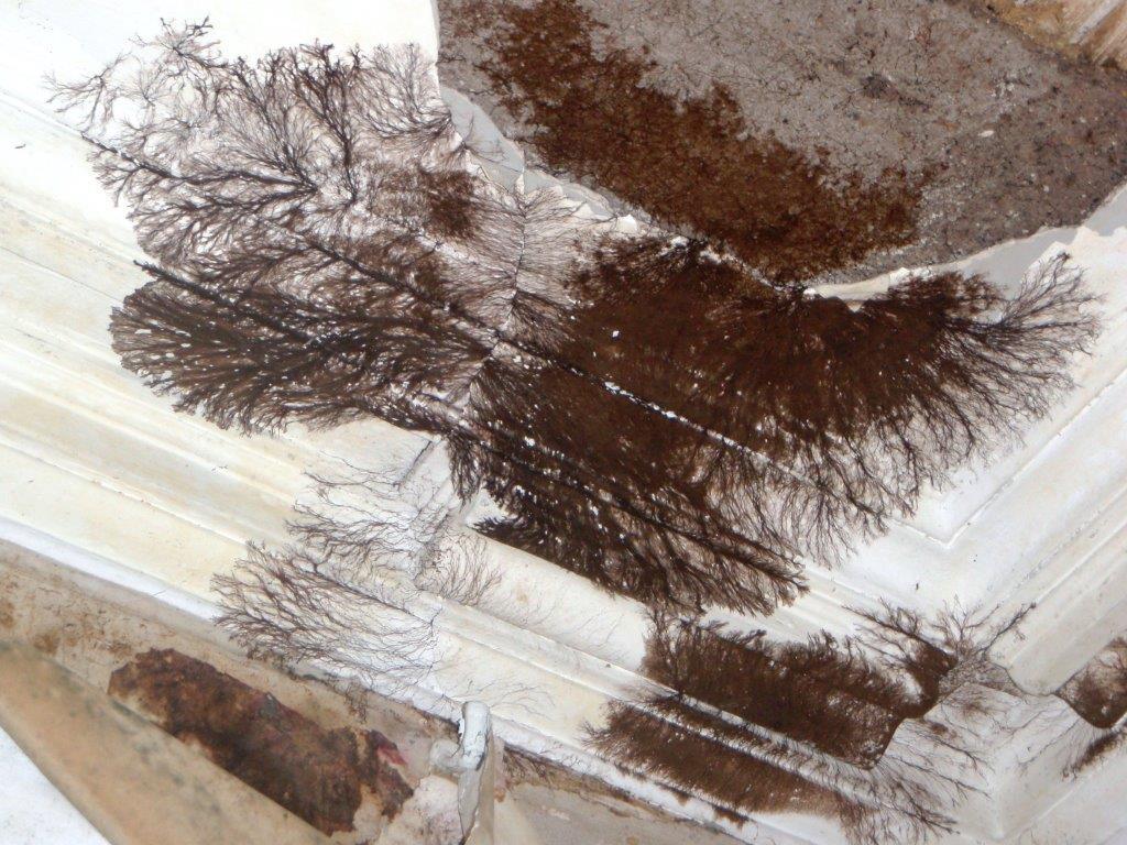 Wet Rot Attack (Coniophora puteana)