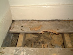 Typical Heavy Woodworm infestation in timber floorboards and joists.