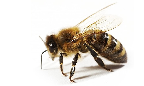What Is The Difference Between A Yellow Jacket And A Wasp The Difference Between...
