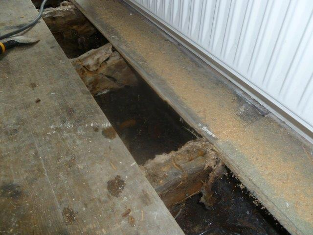Dry Rot Cardiff