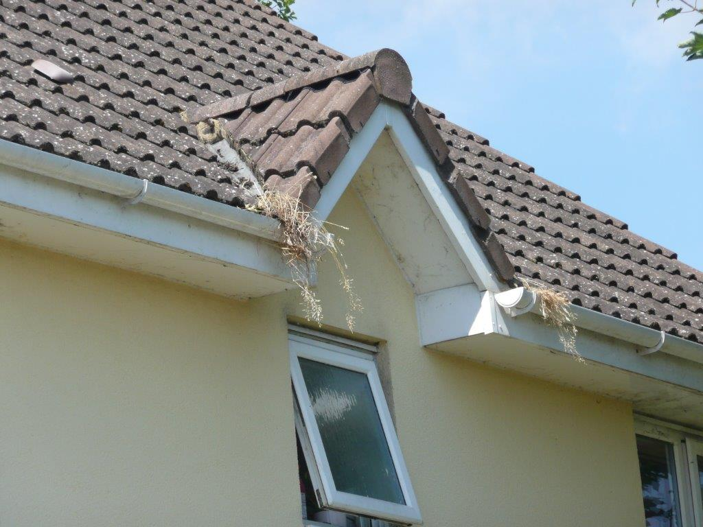 Blocked gutters are one of the most common causes of penetrating damp.